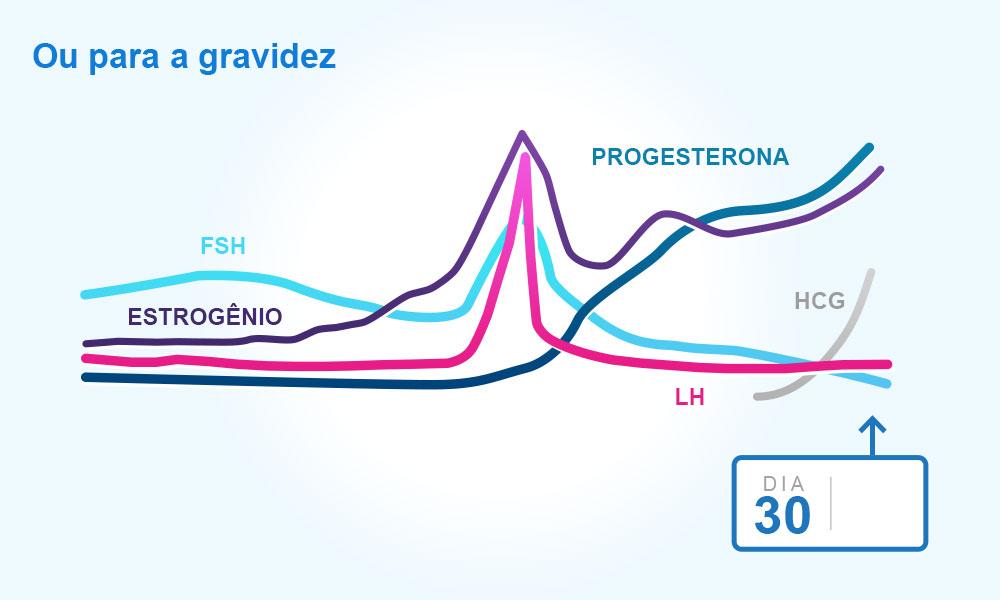 Niveis progesterona ciclo menstrual
